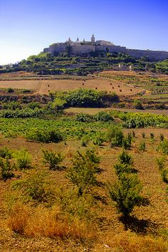 countryside view of old walled city of Mdina, Malta
