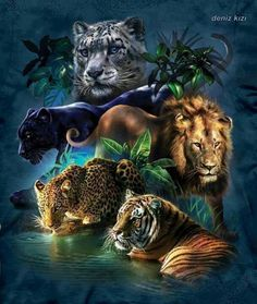 """Jehovah's creation~ Jehovah will tame the """"wild"""" animals. See Isaiah 65:25"""