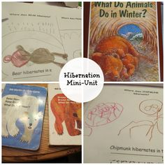 Hibernation Mini-Unit Study!!  Great science for preschool and early elementary!!