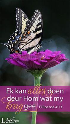 Afrikaans, Good Morning, Buen Dia, Bonjour, Good Morning Wishes