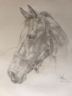 """Tony O'Connor Equine Art 'Moscow Flyer' Graphite on Ingres paper (preparatory study) Framed - 23"""" X 30"""" Donated to the Irish Horse Welfare Trust as part of the exhibition in the Irish National Stud."""