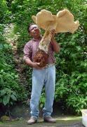 Albümde 3259 yılında en büyük Çiçek (37525) Sarah06 ederek resim: Yeryüzünde büyük Şeyler - Aşırı Fotoğrafçılık - Pxleyes.com