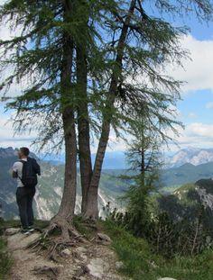 Als je de top van Sleme bereikt heb je rondom vrij uitzicht over de noordelijke bergtoppen van het Triglav Nationaal Park en richting noorden kun je op mooie dagen de bergen van Oostenrijk zien. / www.mijnslovenie.com/sleme-triglav-nationaal-park/ @MijnSlovenie / #wandelen #bergen
