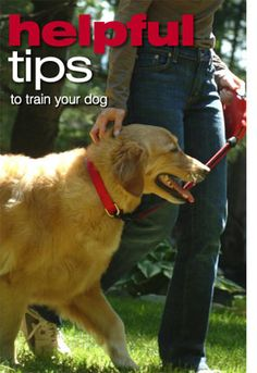 Teaching the basic commands to your dog or puppy