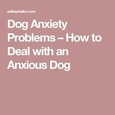 Dog Anxiety Problems – How to Deal with an Anxious Dog