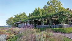 Handley Cellars | A small family-owned winery, making consistently excellent Pinot Noir & Alsace white varietals in the Anderson Valley sinc...