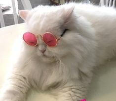 Wearing Glasses, Cat Eye Sunglasses, Kitty, Cats, How To Wear, Animals, Animals Images, Beautiful Pictures, Little Kitty