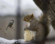 Bird wants squirrel to share – The squirrel finds a piece of bread and it heads up to a branch. While eating a little bird arrives and asks if the squirrel is willing to share. Nature Animals, Animals And Pets, Baby Animals, Funny Animals, Cute Animals, Beautiful Birds, Animals Beautiful, Animal Pictures, Cute Pictures