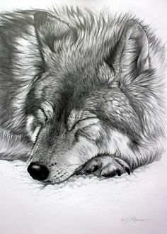 This is awesome! A realistic wolf drawn from a pencil!