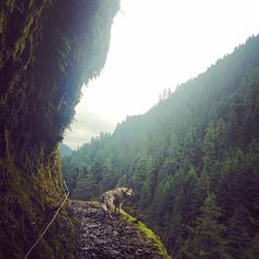 The best things in life are green. And dogs.  #traveloregon #exploregon #dogsofinstagram #adoptsontshop #alaskanmalamute #upperleftusa #neverstopexploring #nevernottogether #wolfpack #sevenwonders #askOR featured @kristenmohror  www.armor-x.com @armorxmount #armorx  #goprohero #gopro #beahero #goproeverything #picoftheday #photooftheday #fromthetribe #WhatASpot