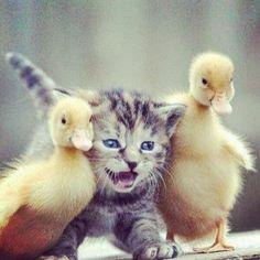 #Cats  #Cat  #Kittens  #Kitten  #Kitty  #Pets  #Pet  #Meow  #Moe  #CuteCats  #CuteCat #CuteKittens #CuteKitten #MeowMoe      Making friends ...   https://www.meowmoe.com/28513/