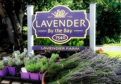 Lavender By The Bay | Lavender by the Bay has been growing the highest quality lavender on Long Island, NY, for more than 15 years. We offer fresh cut bunches (when available) ,dried lavender, lavender plants, lavender sachets and crafts, and honey from our own bee hives.