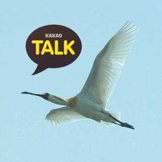 미시령에서 on  KakaoTalk (Began October 01, 2015) ▶ http://goto.kakao.com/jpdo86c5