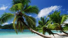 Palm Trees On White Sand