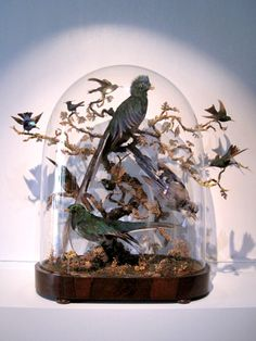 taxidermy-in-art:    Nancy Fouts, Domed Bird, 2011  Taxidermy birds, presented in a glass dome  h: 64 x w: 27 x d: 60cm / h: 25.2 x w: 10.6 x d: 23.6 in