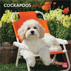 Cockapoos Calendar 2013, lounging on the lawn, very adorable. P.S. This Pinterest board is curated by www.packdog.co, coming this holiday season 2012. If you have a dog you're going to love it.