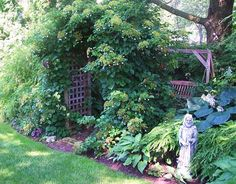 Another gorgeous climbing hydrangea.