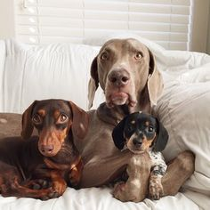 Harlow and Indiana got a new baby sister named Reese.