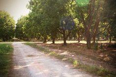 Royalty Pecan Farms