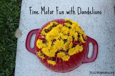 Fine Motor Fun with Dandelions from Teaching Mama