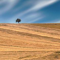 Single Tree by Ersin Türk on 500px