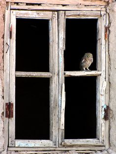 owl in the window
