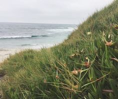 Cloudy days are my most favorite days to head out here 🌫🌫🌊🌊💙 ...for a few moments, the beach is mine and mine alone 😌👌🏻🌱🌼🌱🌱 #metime #cloudydays #peaceandquiet #keepcalm #breathe #ocean #waves #beach #windansea #lajolla #sandiego #sandiegoliving #nature #naturalelements #beautyofnature #freeyourmind #maygray #wildflowers #greenery #saltyair #socal #california #coast #outandabout #explore #ventureout #lajollalocals #sandiegoconnection #sdlocals - posted by Angela Fulgencio…