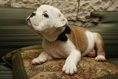 LOOK AT ITS LITTLE BOWTIE