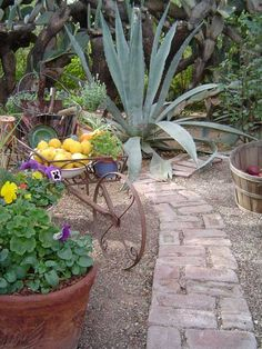 Tohono Chul Park Would Be Great Inspiration For A Tucson Garden.   Garden  Glory   Pinterest   Tucson And Gardens