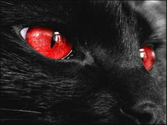 Fantasy pictures with cats eyes. Black cats with colored eyes. Close-up picture black cat with purple eyes. Black cat with red eyes. Metal Smoking Pipes, Eyes Wallpaper, Cat Background, Cat Aesthetic, Aesthetic Grunge, Red Cat, Black Cats, Purple Cat, Red Walls