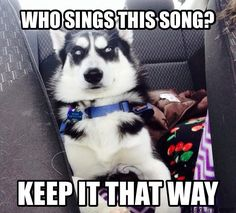 Funny husky - Funny Husky Meme - Funny Husky Quote - The post Funny husky appeared first on Gag Dad. Husky Humor, Husky Quotes, Funny Husky Meme, Dog Quotes Funny, Funny Dogs, Cute Dogs, Awesome Dogs, Funny Memes, Wolf Quotes