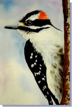 downy woodpecker paintings - Yahoo Image Search Results