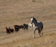HSUS-HSLF HORSES, GUNS, HUMAN & ANIMAL RIGHTS | TheDogPlace.org