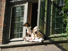 Dogs at the window in Bruges, Belgium