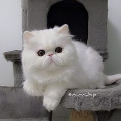 if i EVER owned a pussy cat this would be the ONLY one I would get :)