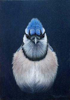 Blue Jay by Wildlife Artist Jeremy Paul
