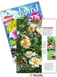 Tips om Allers Trädgård 17-07 sidan 76