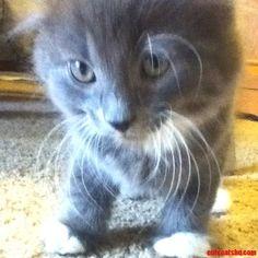 <3 - http://cutecatshq.com/cats/1432/