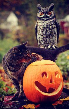 Cat in Halloween