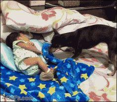 dog, baby, sleepong