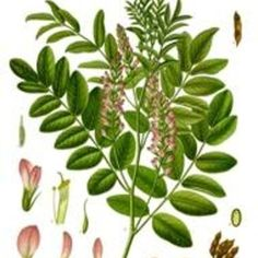 What Are the Side Effects of Licorice Root?
