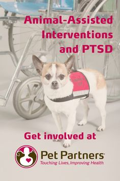 Animal-Assisted Interventions and PTSD | Pet Partners | Animal-assisted inventions can help those suffering from PTSD and other mental illnesses. Pet Partners is proud to support veterans and others suffering from PTSD. This blog discusses the benefits animals have in the lives of people suffering from PTSD and related mental illnesses. Therapy animals, like cats, dogs, guinea pigs and more, have an impact on the humans they service. Find out more on PetPartners.org. Emotional Support Animal, Nonprofit Fundraising, Therapy Dogs, Coping Skills, Mental Health Awareness, Therapy Activities, Ptsd, Guinea Pigs, Dog Training