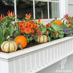 Fall window boxes wi