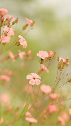 Pink Flowers HD iPhone wallpaper