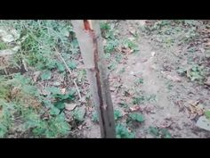 Cum se repară o rană la un pom (zauzera pyrina) Gardening, Youtube, Life, Garten, Lawn And Garden, Garden, Square Foot Gardening, Garden Care, Horticulture