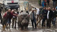 Heavy flooding in the Georgian capital, Tbilisi, has killed eight people, with officials warning people to stay indoors to avoid animals that have escaped from a zoo.