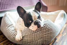 Notre produit : Comment savoir si votre chien a un rhume ou quelque chose de plus grave ?  Catégorie : post  Description :  Selon le CDC, l'adulte moyen attrape deux à trois rhumes par an. Les enfants en ont encore plus.    Mais qu'en est-il des chiens ? Sont-ils à risque de contracter les mêmes types de virus qui causent nos misérables symptômes ?    La réponse est oui et non.    Très peu de virus passent d'une espèce à l'autre. Les germes du rhume ont tendance à adhérer à leur propre…