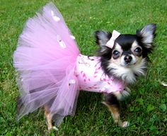 Breast Cancer Bites Tutu Harness Dog Dress by KOCouture on Etsy, $90.00