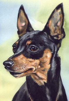 Pet Portraits by Carol Wells: Dog Breeds Mini Pinscher, Miniature Pinscher, Pincher Dog, Dachshund, Dog Paintings, Baby Puppies, Dog Art, Pet Portraits, Dog Life