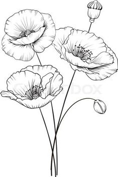 Colour Images Line Drawing Doodle Art Diy Art Emboss Poppies Dandelion Watercolour Art Projects Flower Line Drawings, Flower Sketches, Drawing Sketches, Tattoo Sketches, Drawing Art, Sketching, Watercolor Flowers, Watercolor Art, Watercolor Border